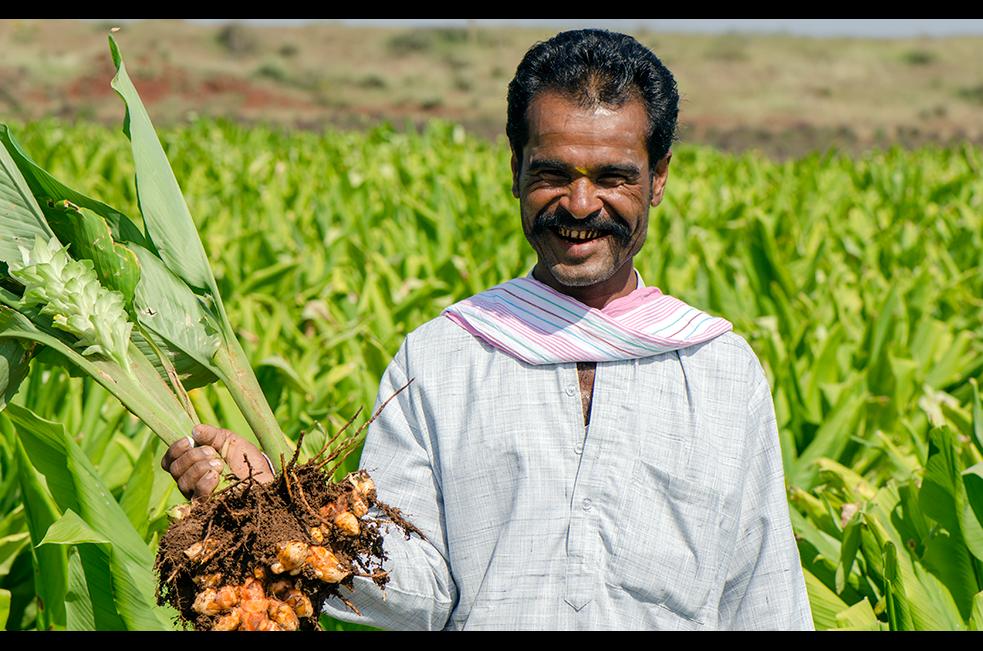 Farmer with organic turmeric root
