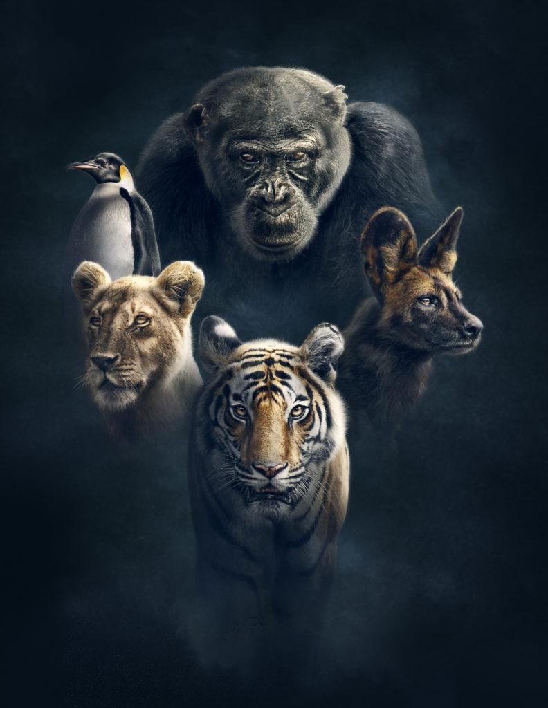 Dynasties, narrated by Sir David Attenborough.