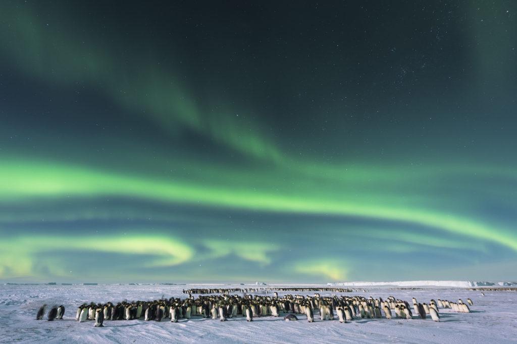 Dynasties, Emperor penguins - photographer Stefan Christmann