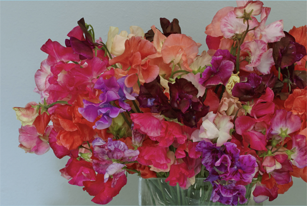 A floral bouquet from Fern Verrow farms.
