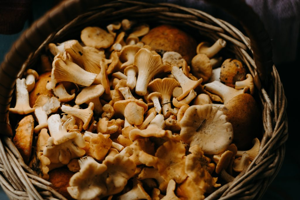 A basket of foraged mushrooms. Photo by Irina Iriser from Pexels.